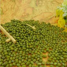 De alta qualidade feijão verde mungo, origem mongólia, bem embalar