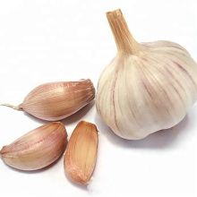 Fresh Normal White Garlic Liliaceous Vegetables Product Type GARLIC