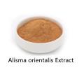 Buy online ingredients Alisma orientalis Extract powder