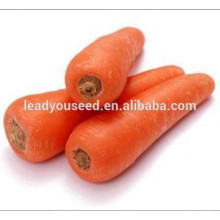 MCA02 Fushi heat resistant high quality carrot seeds price