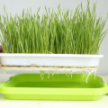 Skyplant Seed Sprouter Tray pour plantes sans germes
