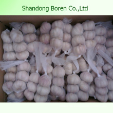 Exportieren Sie Shandong Pure & Normal White Knoblauch