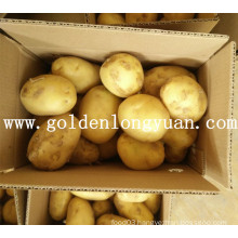 Good Crop Fresh Potato From China