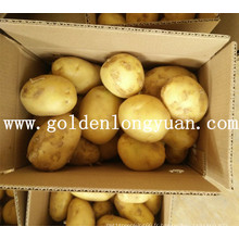 Bonne pomme de terre fraîche de Chine
