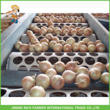 Market Onions Price Fresh Bulb Onion