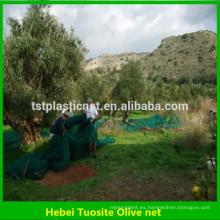 red de cosecha de olivo