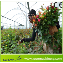 Leon series low cost plastic flim greenhouse for vegetable and flower