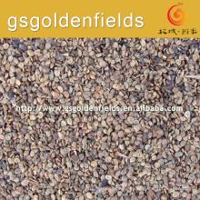 Taux de survie élevé des graines de baies de goji noires