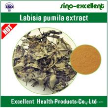 Female Product Labisia Pumila Extract Kacip Fatimah Extract