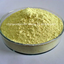 Sophora Japonica Auszug Rutin 95%
