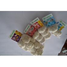 Fresh Garlic White High Quality Fine