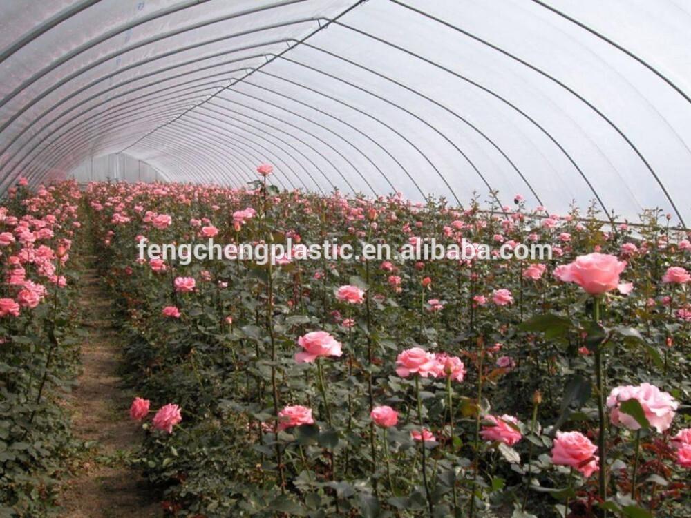 Flower Greenouse