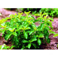 Factory Price Direct Supply Stevia Leaf Extracts 90%Min. HPLC