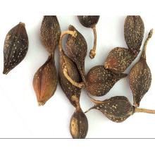 Top Quality Forsythiae Fructus