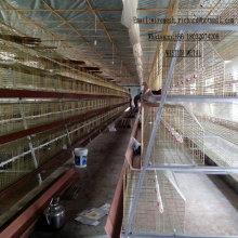 Huevos de Rubbit de carne Pollo Cage Henhouse rico de negocios en China