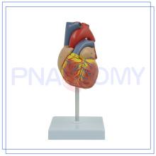 ПНТ-0400 высокого качества изготовленный на заказ цветастый человеческого сердца, кровеносных сосудов модель с хорошим обслуживанием