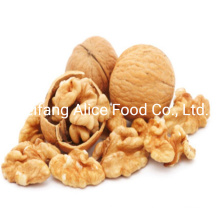 Export Chinese Good Quality Wholesale Walnut Kernels