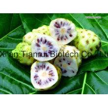 100% Natural of Noni Fruit Powder /Noni Jucie Powder /Noni Extract Powder
