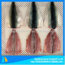 Filet de maquereau bon marché congelé dans le poisson pour un fournisseur parfait