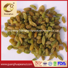 Wholesale Price Xinjiang Red Raisin Green Raisin