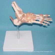 Medizinische menschliche Knochen-Funktion Skelett-Modell (R020908)
