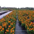 Alfombrilla de control de malezas, Cubierta de tierra / Grond de PP para jardín / Exportar a Europa