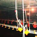 Bebedor das aves domésticas de equipamento para avicultura
