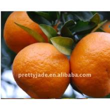 Dulce mandarín bebé