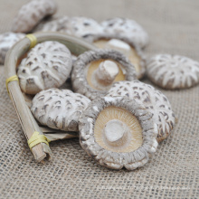 Champignons shiitake séchés