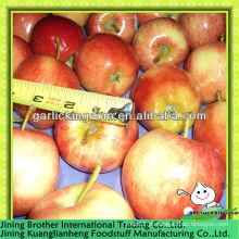 China maçã vermelha gala