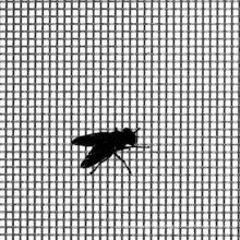 moustiquaire métallique, moustiquaire, moustiquaire anti-insectes, treillis métallique, filet de fer