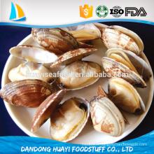 Fournisseurs et exportateurs de palourdes à ongles courts congelés de haute qualité en Chine