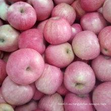 Alta calidad de manzana Qinguan roja fresca
