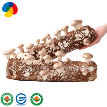 Qihe Top Qualtiy Shiitake Pilz Log
