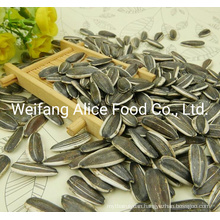 Good Price Large Quantity Supply Chinese Sunflower Seeds