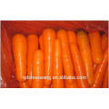 2014 CHINESE CARROT