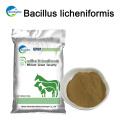 Animal Health Bacillus Licheniformis Bacteria For Shrimp Feed