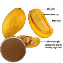 Extrato de semente de manga africana para suplementos dietéticos