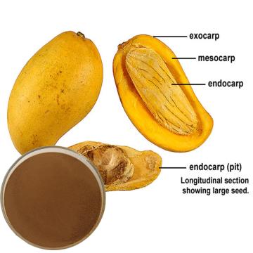 Extrait de graine de mangue africaine pour compléments alimentaires
