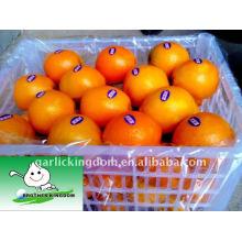 Navel Orange 65mm