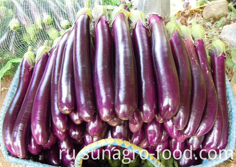 Fresh Eggplant For Export