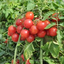 Aminoácido líquido de fertilizante orgánico