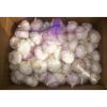 2016 Fresh Normal White Garlic Market Price