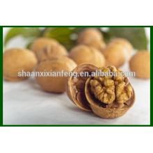 Noz natural natural de alta qualidade chinesa seca