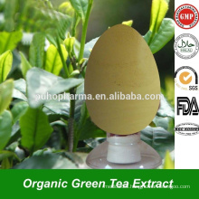Premium Instant Green Tea Extract Powder EGCG Catechin Polyphenol in Bulk Steviosides for Anti Oxidant Green Tea Extract