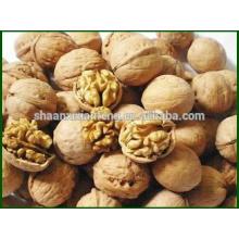 Hot Sale Dried Organic Natural Walnut