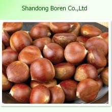 Chestnut chino nuevo de la cosecha de China