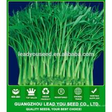 MWS03 Qigeng verde tallo semillas de espinaca agua verde proveedor