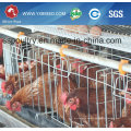 a Type Chicken Egg Laying Cages