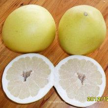 Bonne qualité de pomelo doux frais